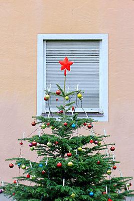 Tannenbaum     - p450m1092512 von Hanka Steidle