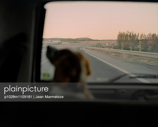 Brittany spaniel travelling in car boot on freeway - p1028m1109181 by Jean Marmeisse