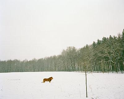 p1294m1159634 by Sabine Bungert