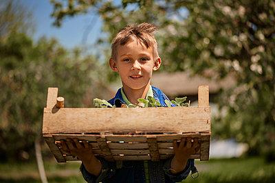 Boy holding crate of seedlings in back yard - p300m2282710 by Zeljko Dangubic