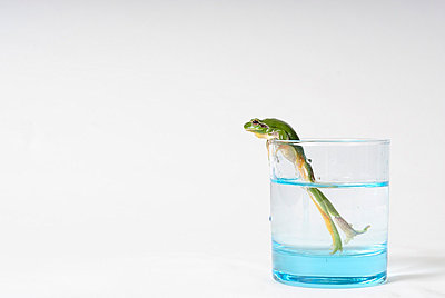 Frog in a glass - p8290004 by Régis Domergue