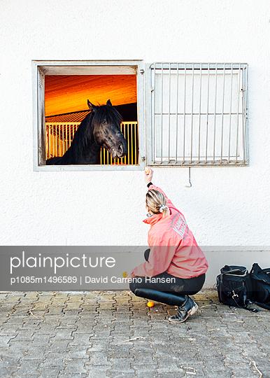 Frau füttert Reitpferd mit Mandarinen - p1085m1496589 von David Carreno Hansen