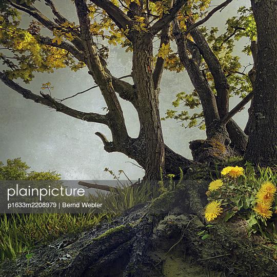 Dandelion - p1633m2208979 by Bernd Webler