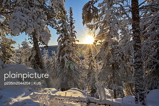 Goldener Sonnenschein erleuchtet den verschneiten Wald - p235m2044204 von KuS