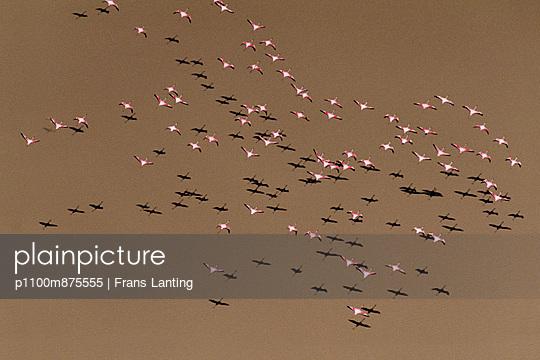 p1100m875555 von Frans Lanting