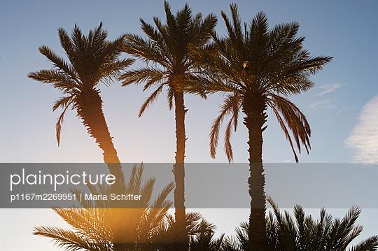 Marokko, Palmen - p1167m2269951 von Maria Schiffer