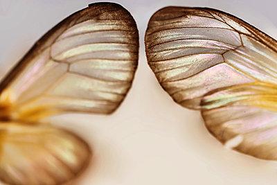 Macro Butterfly - p1054m2278047 by Maria Kazvan