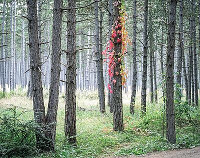 Wald - p1205m1065999 von Klaus Pichler