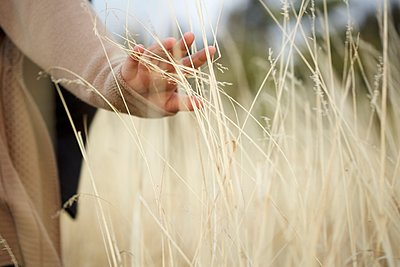 Hand in Grassy Field - p1339m1468042 by norma cordova