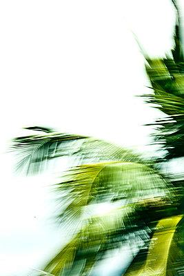 palmwedel - p627m670839 by Chris Keller