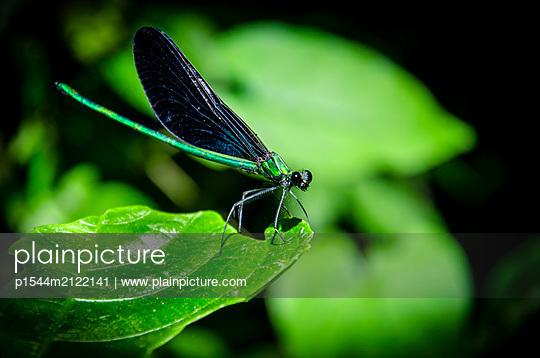 Dragonfly - p1544m2122141 by Mirka van Renswoude