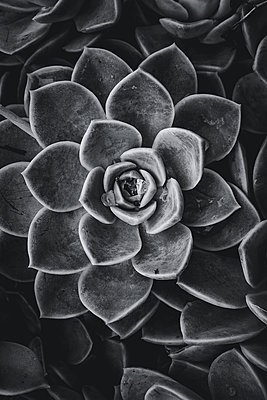 Succulents - p1655m2232070 by lindsay basson