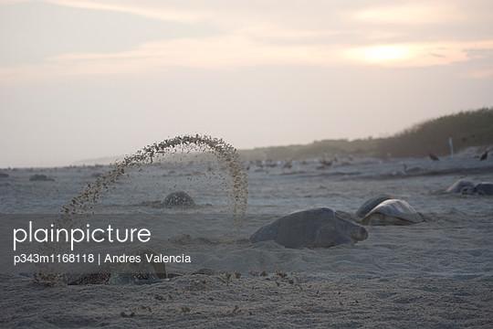p343m1168118 von Andres Valencia