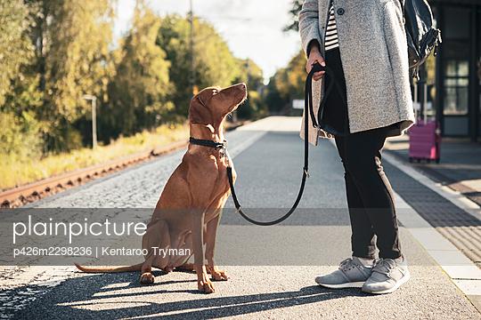 Brown Vizsla dog looking at female owner on railroad station - p426m2298236 by Kentaroo Tryman
