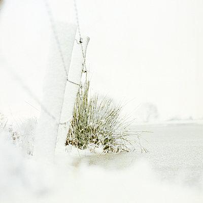 Winter - p1186m972798 by Christine Henke