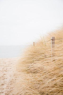 Way through dunes - p993m823491 by Sara Foerster