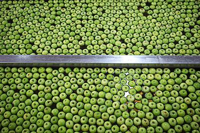 Green apples in factory being washed - p300m2062963 by zerocreatives