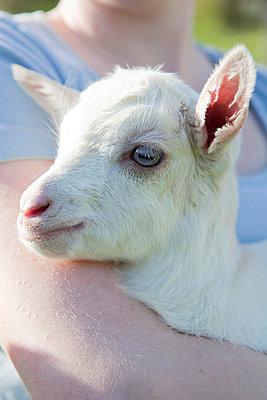 Holding a goatling - p4410557 by Maria Dorner