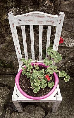 Stuhl als Blumentopf - p1443m1511348 von SIMON SPITZNAGEL
