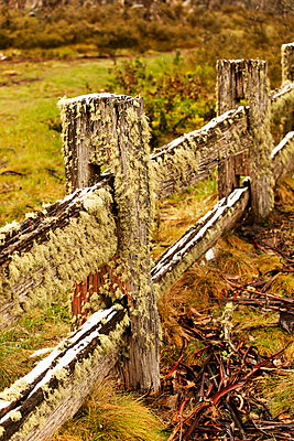 Moss at a fence - p628m886678 by Franco Cozzo