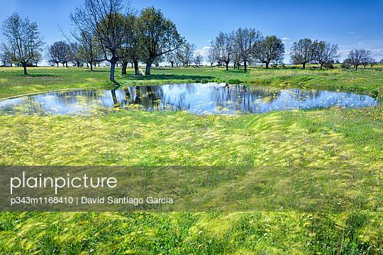 p343m1168410 von David Santiago Garcia