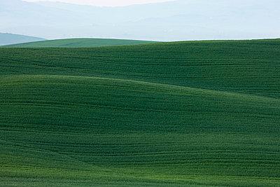 Gewelltes Land - p7980157 von Florian Loebermann