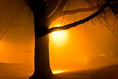Baum im Nebel - p979m1513294 von Martin Kosa