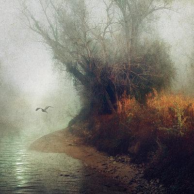 Autumn Wings - p1633m2277945 by Bernd Webler