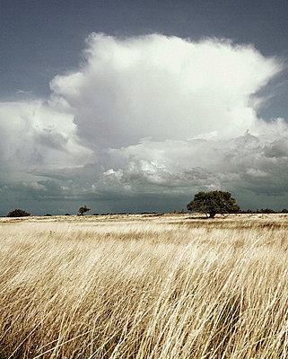 landscape with fields - p4163363 by Thilo Sicheneder