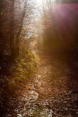 Autumn - p445m731852 by Marie Docher