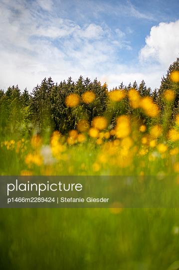 Summer meadow - p1466m2289424 by Stefanie Giesder