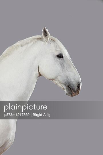 Pferdeportrait - p573m1217392 von Birgid Allig
