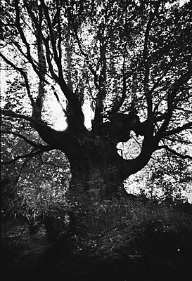 Old tree - p567m1056326 by Gabrielle Duplantier