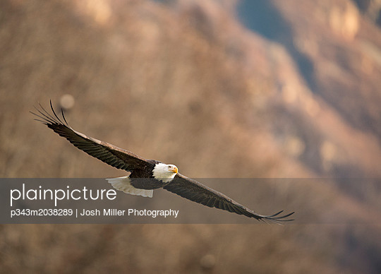 p343m2038289 von Josh Miller Photography