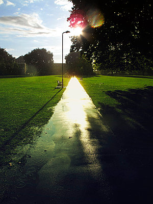 Rainy pathway in afternoon sun - p1072m829465 by Neville Mountford-Hoare