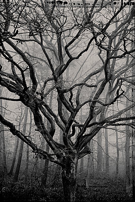 Baum im Nebel - p1088m1207331 von Martin Benner