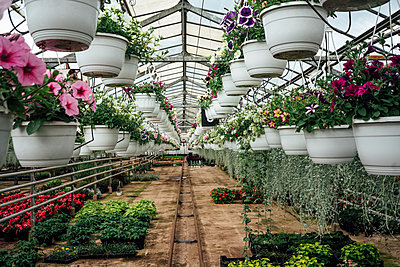 Various potted plants hanging from ceiling of greenhouse - p300m2300540 by Vasily Pindyurin