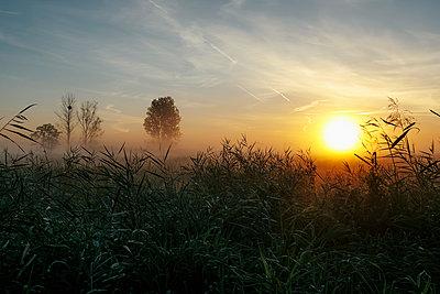 Idyllic, tranquil sunrise and fog over rural field, Leopoldshagen, Mecklenburg-Vorpommern, Germany - p301m2070899 by Sven Hagolani