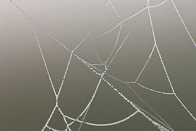 Spinnennetz - p570m793399 von Elke Röbken