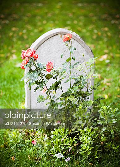 Roses in front of a gravestone Stockholm Sweden.
