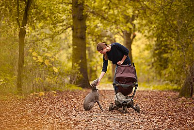 Mid adult mother pushing baby carriage and petting dog in autumn park - p429m1102896f by J J D
