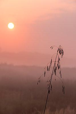 Sonnenaufgang im Frühnebel - p739m1170263 von Baertels