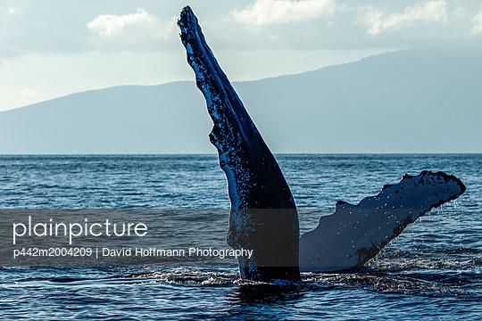 p442m2004209 von David Hoffmann Photography
