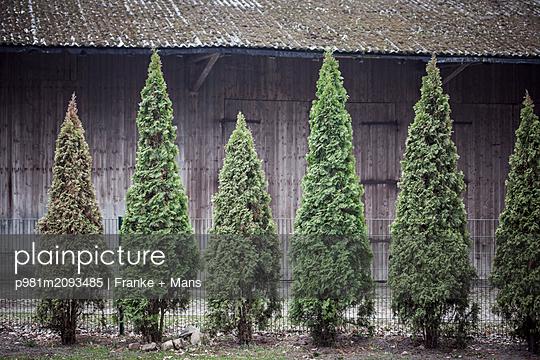 Bäume vor Schuppen - p981m2093485 von Franke + Mans