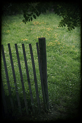 Old wooden fence in garden - p1028m1044818 by Jean Marmeisse
