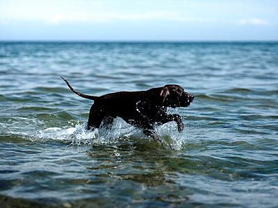 Hundstage - p551m2005775 von Kai Peters