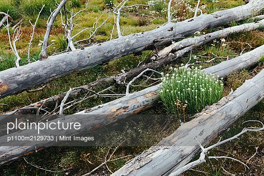 08.10.19 - p1100m2129733 by Mint Images