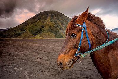 Reitpferd in der Nähe des Bromo Vulkans - p1108m1158903 von trubavin