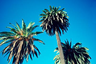 Venice - California - p432m1082667 by mia takahara