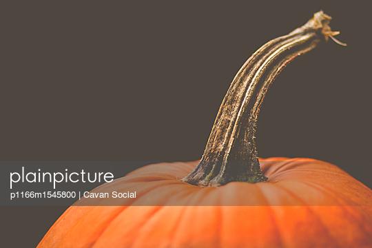 p1166m1545800 von Cavan Social